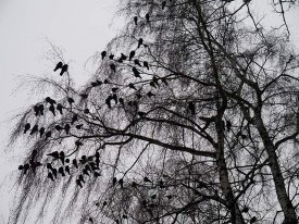 Immobility - on the trees in a park, cold -12 degrees, winter has come... influenza.