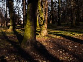 Christmas shadows 2 - this Christmas Eve day, afternoon in a park...